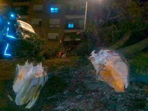 Árbol caido sobre vehículos en la calle Recreo de Béjar