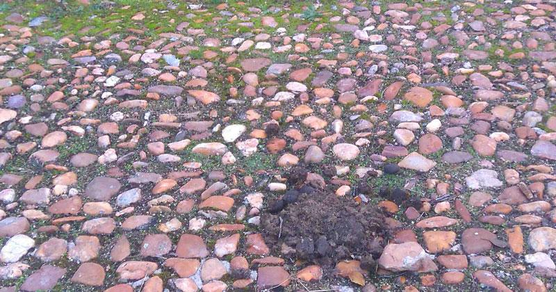 mojon de burro en la rotonda red de El Bosque