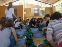 Bateo de Oro realizado por los alumnos del IES Quercus en Las Cavenes. El Cabaco