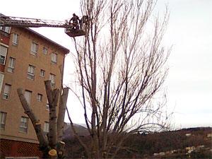 Poda de arboles en González Macias, Béjar