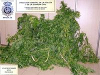 Marihuana incautada por la Policia de Béjar