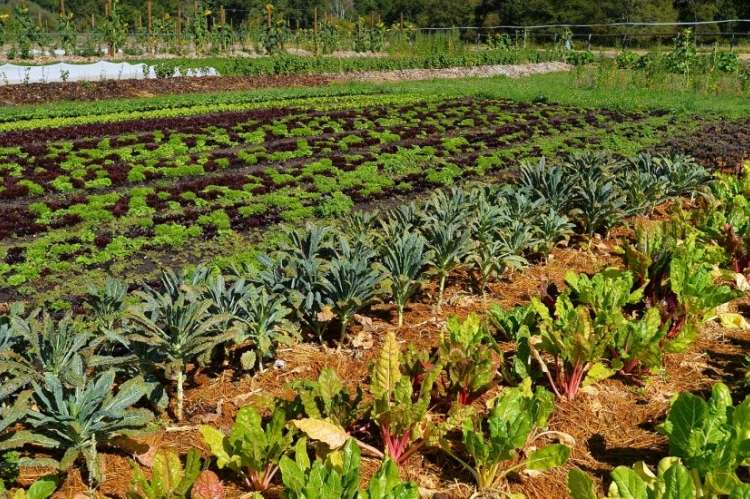Ejemplos de Jardines Franceses (Foto: Potager Chambord)