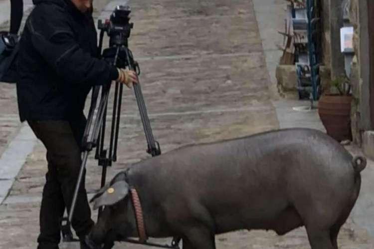 Cerdo de San Antón por las calles de Mogarraz