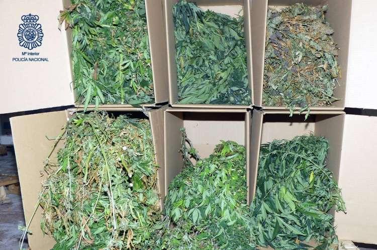 Marihuana incautada en Salamanca