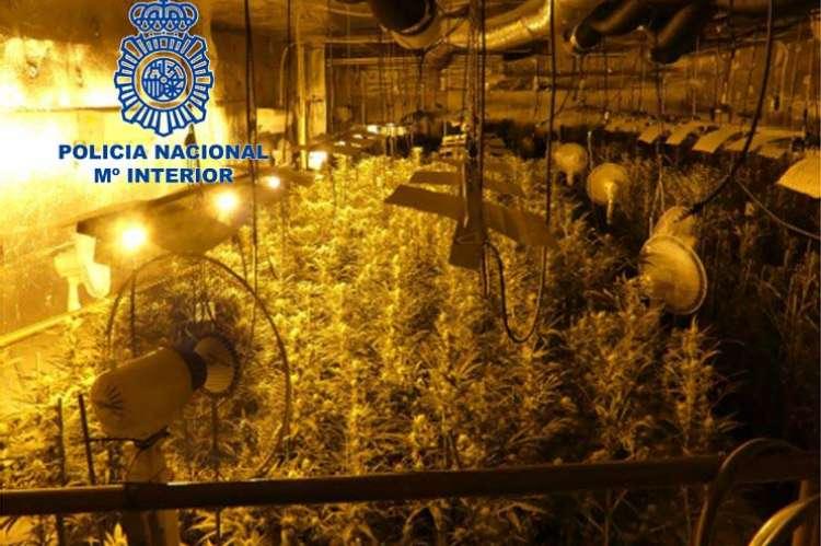 Marihuana indoor