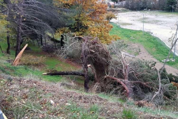 Arbolado dañado en la zona de Montemario