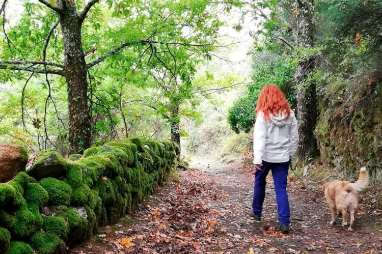 Imagen de Otoño en la Sierra de Francia