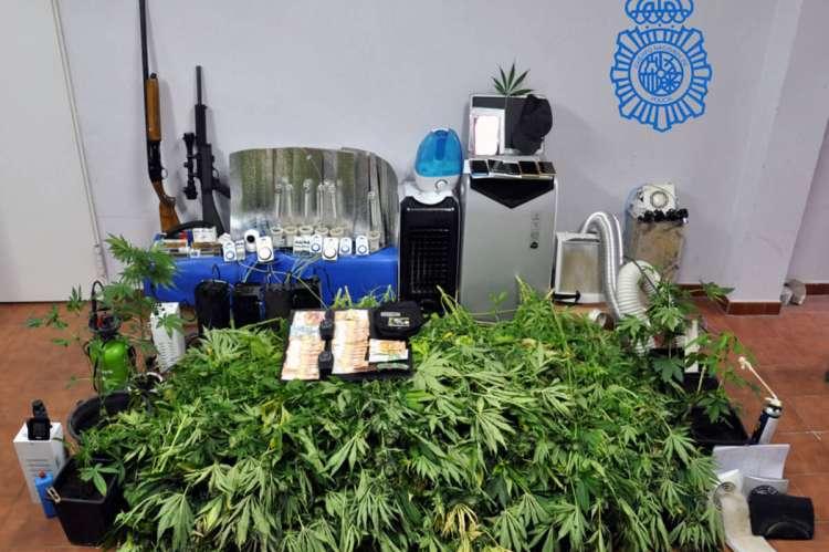 Plantas de marihuana y armas de fuego incautadas durante la operación