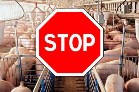 Imagen de una granja porcina