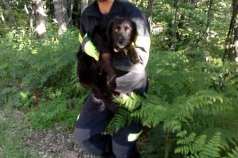 Bombero de Béjar con el perro rescatado del interior del vehículo