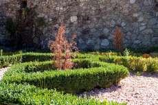 Árboles secos junto a arbustos ornamentales