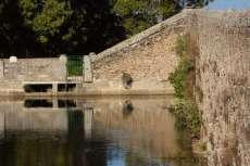 Muro del estanque con maleza y arbustos creciendo en su interior