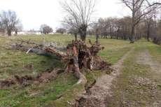 Árbol caído junto a un camino