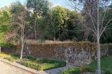 Árboles, tapia y elementos decorativos arbóreos