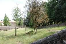 Arboles y prado con montón de hierba cortada