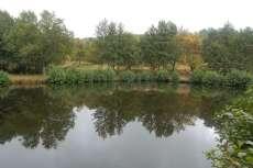 Balsa de agua con arbustos a su alrededor