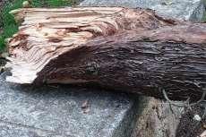 Parte del tronco de unos de los árboles derribados