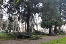 Daños del temporal parque municipal