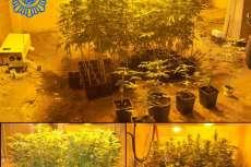 Interior de la plantación de marihuana