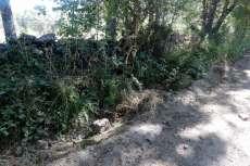 Lateral del camino junto a una tapia