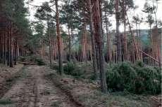 Imágenes de las talas en el monte de Candelario